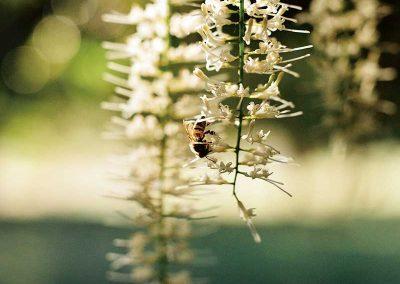 greenlee-farm-bees-honey-macadamias