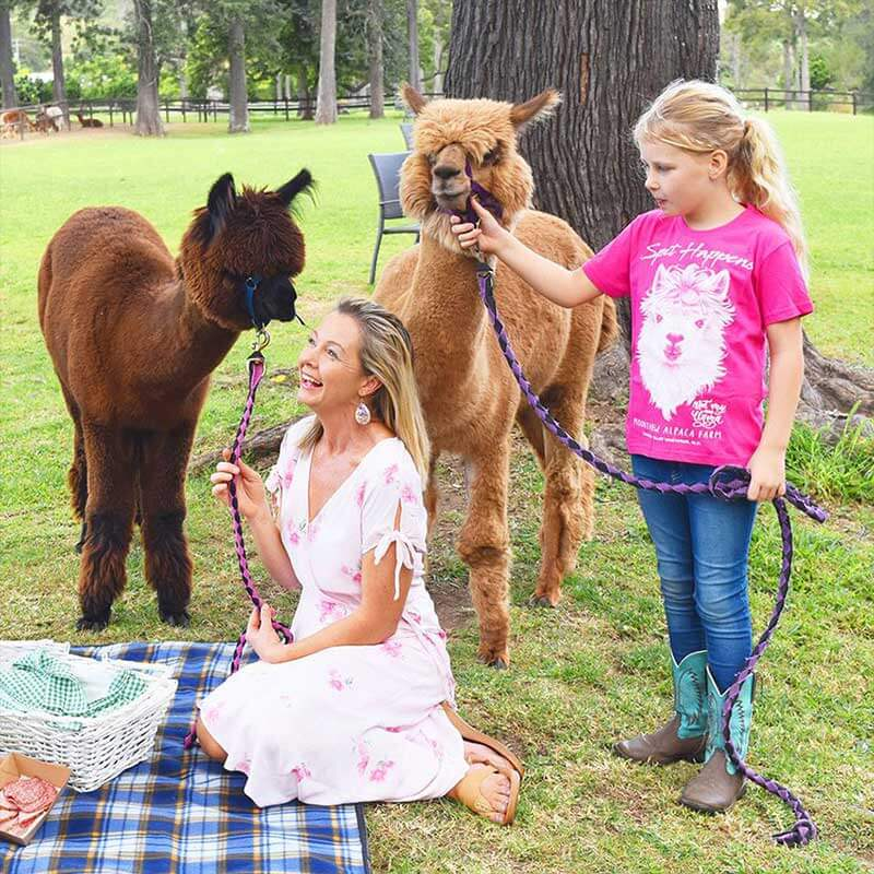 greenlee-farm-alpacas